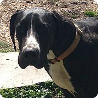 Adopt A Pet :: Tyson - Boston, MA