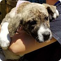 Adopt A Pet :: Harley - Osteen, FL
