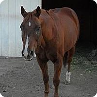 Adopt A Pet :: Skipper - Larskpur, CO