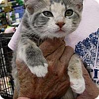 Adopt A Pet :: Bella - Vero Beach, FL