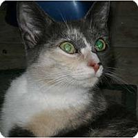 Adopt A Pet :: Alabama     needs spay sponsor - Morris, PA