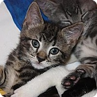 Adopt A Pet :: Eliot (LE) - Little Falls, NJ