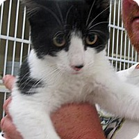 Adopt A Pet :: Joey - Riverhead, NY