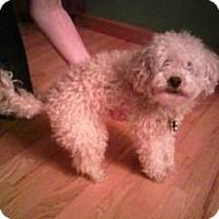Adopt A Pet :: SADIE - Bluff city, TN