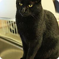 Adopt A Pet :: Trumpet - Columbia, MD