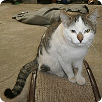 Adopt A Pet :: Gilligan - Leamington, ON