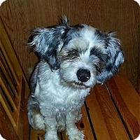 Adopt A Pet :: Trixie - Spring City, TN