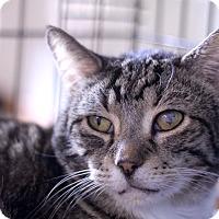 Adopt A Pet :: Navi - Chicago, IL