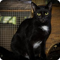 Adopt A Pet :: Teddy - BROOKSVILLE, FL