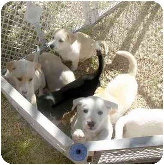 Puppy rescue fort worth tx