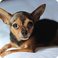 Adopt A Pet :: Libby (Liberty) - Romeoville, IL