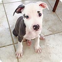 Adopt A Pet :: Jynx - Ft. Myers, FL