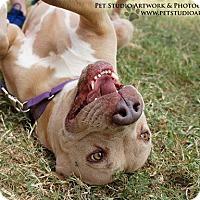 Adopt A Pet :: Bonnie Blue - Bertram, TX
