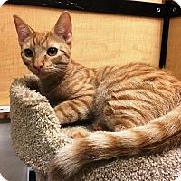 Adopt A Pet :: Rhett - Riverside, CA