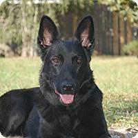 Adopt A Pet :: Asti - Ormond Beach, FL