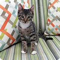 Adopt A Pet :: Eli - Waco, TX