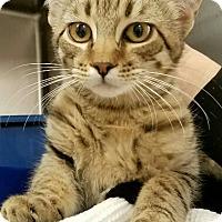 Adopt A Pet :: Ivy - Monrovia, CA