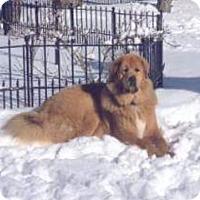 Adopt A Pet :: TY - Toronto, ON