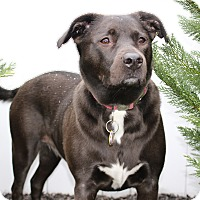 Adopt A Pet :: Coco (COURTESY POST) - Baltimore, MD