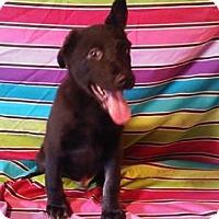 Adopt A Pet :: Sabo - Houston, TX