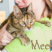 Adopt A Pet :: Meeka - Somerset, PA