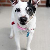 Adopt A Pet :: Maxine - Franklin, IN