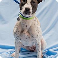 Adopt A Pet :: Quinn - Atlanta, GA