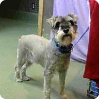 Adopt A Pet :: URGENT on 4/27 @DEVORE - San Bernardino, CA