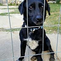 Adopt A Pet :: Chipper - Gretna, FL