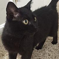 Adopt A Pet :: Pepper - Stevensville, MD