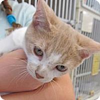 Adopt A Pet :: Clover - Riverhead, NY