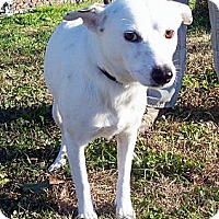 Adopt A Pet :: BRITTNEY - Glastonbury, CT