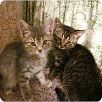 Adopt A Pet :: Grayson & Elena Siblings - Chicago, IL