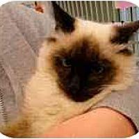 Adopt A Pet :: Caspian - Arlington, VA