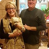 Adopt A Pet :: Cecily - Sacramento, CA