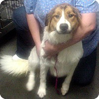 Adopt A Pet :: Louise - Greencastle, NC