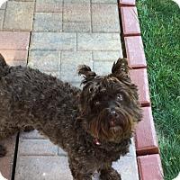 Adopt A Pet :: Lola - Laurel, MD