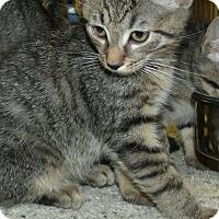 Adopt A Pet :: POOKY - Acme, PA