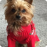 Adopt A Pet :: Winston - Baton Rouge, LA
