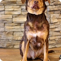 Adopt A Pet :: Hershey ADOPTION PENDING - Waldorf, MD