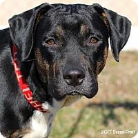 Adopt A Pet :: Sadie - Bedford, VA