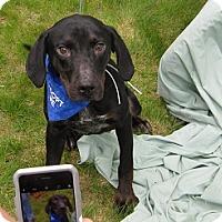 Adopt A Pet :: Belden - Glastonbury, CT