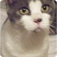 Adopt A Pet :: Winslow - Kensington, MD