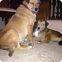 Adopt A Pet :: Emmie - Bardonia, NY