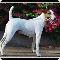 Adopt A Pet :: Flash - Indian Trail, NC