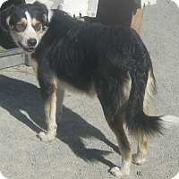 Adopt A Pet :: David - Hillsboro, OH