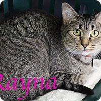 Adopt A Pet :: Rayna - Bradenton, FL