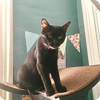 Adopt A Pet :: Stitch - Nashville, TN