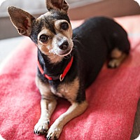 Adopt A Pet :: Maple - Santa Barbara, CA
