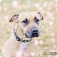 Adopt A Pet :: Bodhi - Salt Lake City, UT